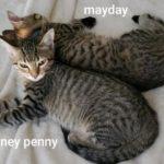 Mayday & Money Penny
