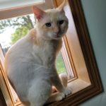 Tanner Cat